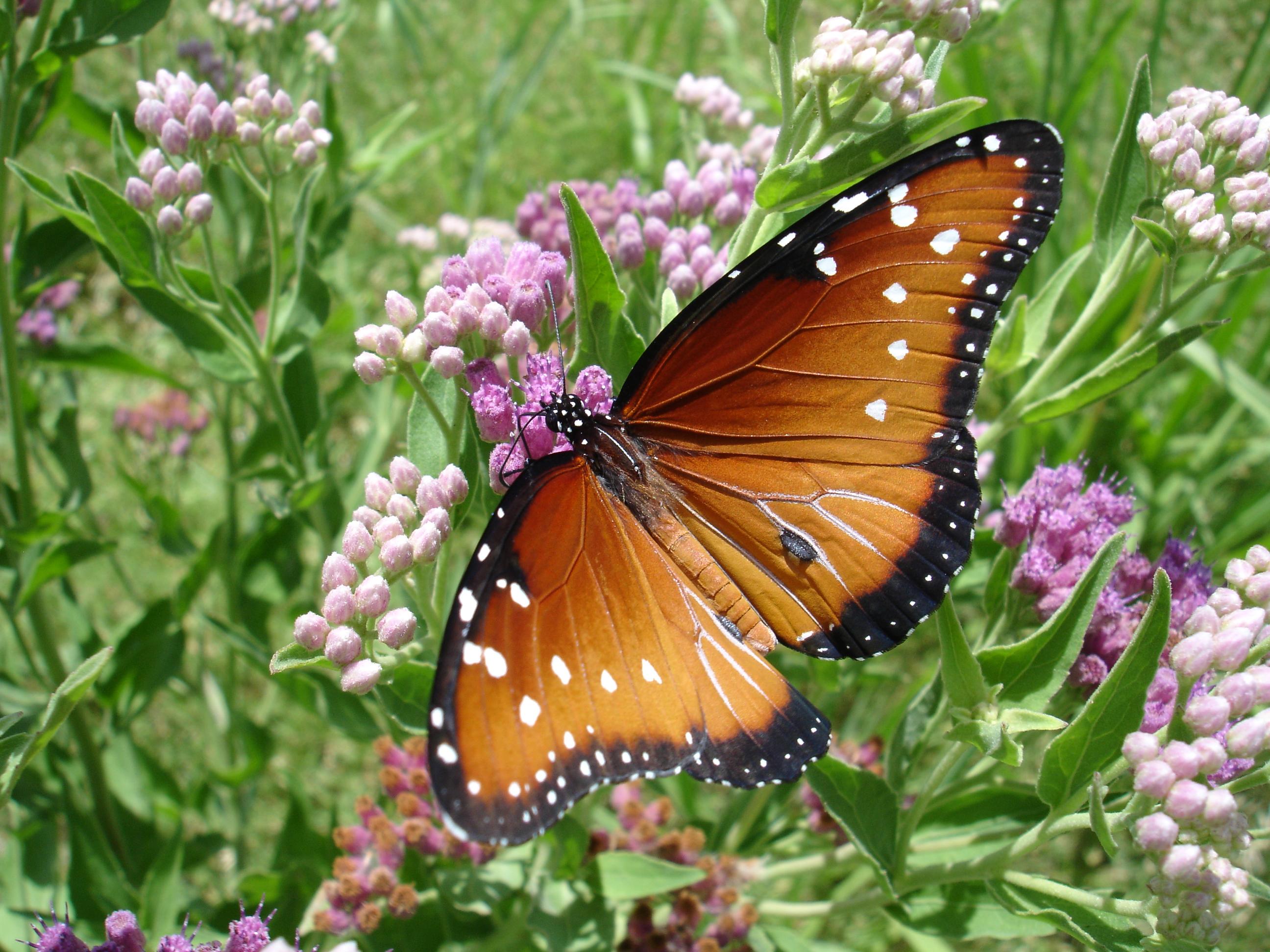 butterfly-1392408